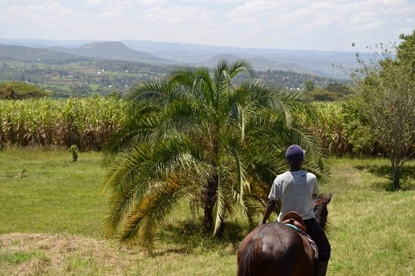 views-of-kericho-during-the-horse-ride